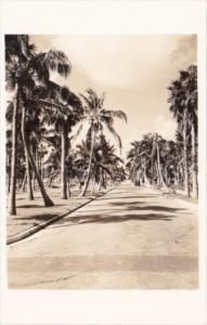Cuba Avenue Of Palms Real Photo
