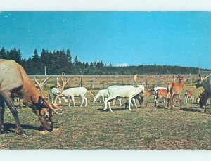 Pre-1980 WILD ANIMAL FARM Toledo by Chehalis & Castle Rock & Long View WA AD6099