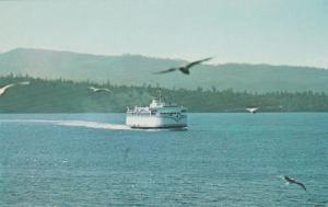 Seagulls and Ferry at Vancouver Island BC, British Columbia, Canada