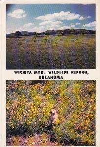Wichita Mountain Wildlife Refuge Oklahoma