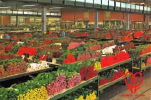 Netherlands Aalsmeer Holland World Flower Centre, Cutflower section