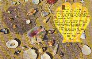 Collection Of Sea Shells 1969