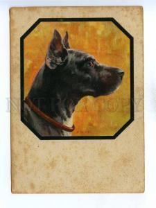 195806 GERMANY GREAT DANE dog portrait MERKER Vintage postcard