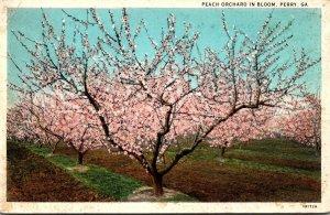 Georgia Perry Peach Orchard In Bloom Curteich