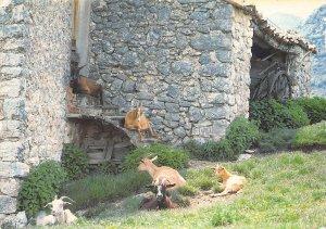 France Images de Provence Requefort les Pins Goats Animals Cottage Postcard