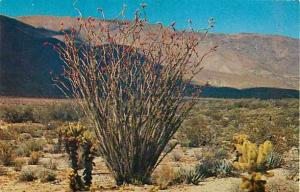 Desert Fflower: Ocotillo, Chrome