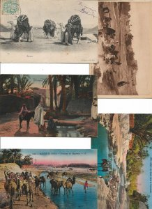 Algeria Postcard Lot of 9 With Camels And Natives Scenes 01.13