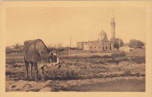 ALEXANDRIA , Egypt , 00-10s ; Sidi Gaber Mosque