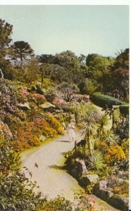 Isle of Scilly Postcard - Tresco Abbey Gardens - Ref 19861A