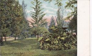 New York Syracuse Scene In Walnut Park 1908