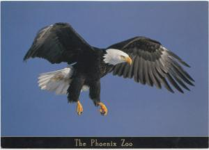 Bald Eagle, The Phoenix Zoo, unused Postcard