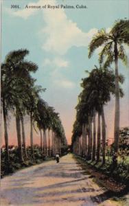 Cuba Havana Avenue Of Royal Palms