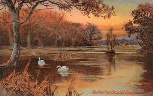 The Forest Pool, Chingford Epping Forest, Swans