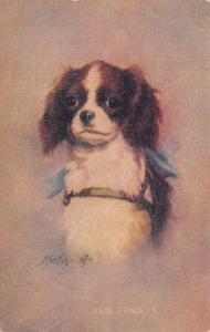 Zula Kenyon~Princess~King Charles Spaniel Puppy~Blue Bow Ribbon~#5560