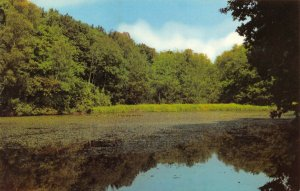 Vintage Hampshire Postcard, Hiltingbury Lake, Chandler's Ford FN2