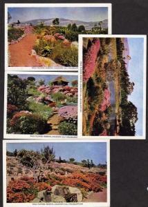 Lot 4 Wildflowers Reserve Flowers Caledon South Africa Postcard Veldblomtuin