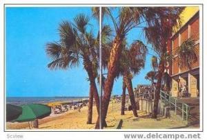 Palms in front of  Pavillion, Myrtle Beach, South Carolina, 40-60s