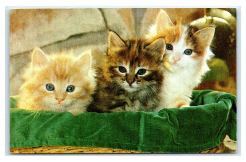 Postcard Meow!! cute kittens cat kitty sitting on green blanket in basket A47
