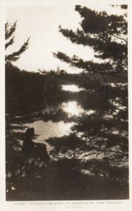 RP: WIGWASSAN , Lake Rosseau , Ontario , 1930s ; Sunset thru Pines