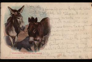 Beloit West Allis WI State Fair Park Donkeys E. C. Kropp Vintage Postcard B06