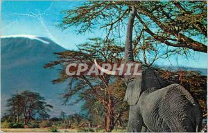 Modern Postcard African Wild Life Elephant