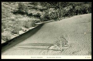 Sand Grass. Duneland Study. C.R. Childs camera study