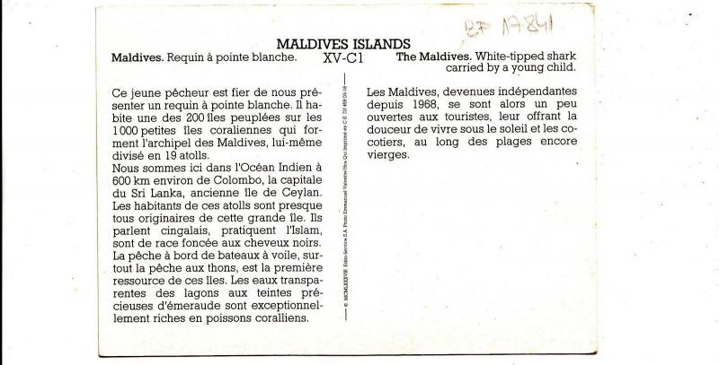 BF17841 maldives islands  whithe tipped shark types child  front/back image