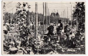 Social History; Hop Picking, The Hop Gardens & Oast Houses RP PPC, 1960 PMK