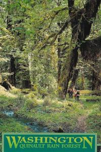 Washington Scene In Quinault Rain Forest 2005
