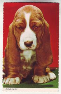 P695 neat puppy postcard, a tired traveler