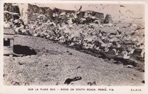 RP: Sur la Plage Sud - Birds on South Beach , PERCE , Quebec , Canada , PU-1948