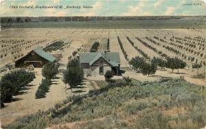 1907-1915 Postcard; Fruit Orchard SW of St. Anthony ID Fremont County Posted