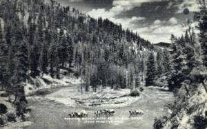 Fording Middle Fork of Salmon River Salmon River ID Unused