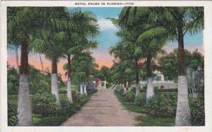 Florida Trees Royal Palms 1937