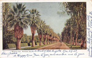 Palm Trees on Magnolia Avenue, Riverside, California, Early Postcard, Used