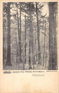Hinsdale New Hampshire Mt Pisgah Among The Pines Antique Postcard K97065