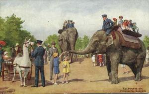 London, Zoological Gardens, Elephants, Lama Cart (1935) Postcard