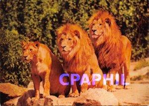 Modern Postcard Lions