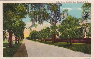 South Carolina Beaufort Palm Drive Leading Into Beaufort 1953