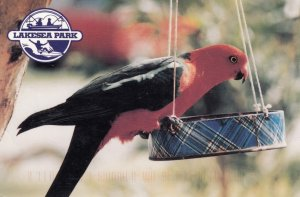 Durras Lake , South Coast , N.S.W. , Australia 2007 ; King Parrot