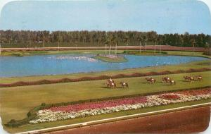 Hialeah Race Course Horse Track Miami Florida FL pm 1954 parading post Postcard