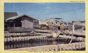 Turtle Crawls Key West FL 1948