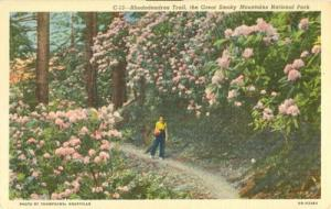 Rhododendron Trail, the Great Smoky Mountains National Pa...