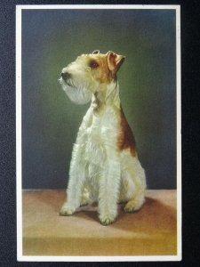 Portrait WIRED HAIR FOX TERRIER Dog Breed c1960s Postcard