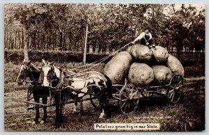 Real Photo Postcard~Farmer Sits Atop 6 Exaggerated Potatoes~Horse Wagon~1908