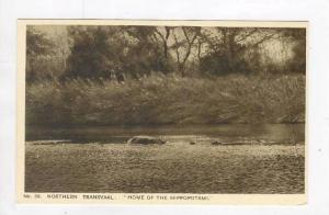 Northern Transvaal, Hippopotami, 30-50s