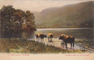 England Thirimere A Cattle Scene
