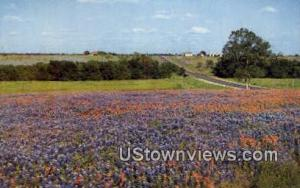 Blue Bonnets Misc TX Unused