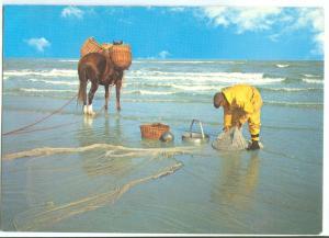 Fisherman of Shrimps, Garnaal Vissers, used Postcard