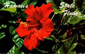 Hawaii State Flower The Red Hibiscus 1984